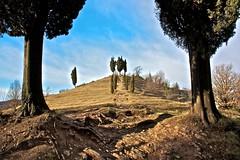 La Collina dei Cipressi [1] (Thumbnail)