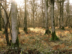 Harewood Forest (Mockney Rebel) Tags: trees forest woodland hampshire harewood