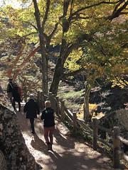 PB243763 (karst) Tags: autumn japan walk autumncolors e30 yamanashi 2011 shosenkyo autumnwalk 1122mmf2835