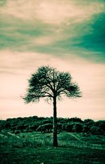 Some tree (susivinh) Tags: sky tree field arbol cielo campo