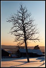 Tree (mmoborg) Tags: winter snow cold kyla vinter snö 2012 mmoborg mariamoborg