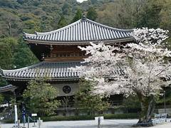Kodai-ji temple in Kyoto (Japan 2007) (paularps) Tags: travel holiday nature japan lumix vakantie flickr culture panasonic sakura leisure 2007 reizen flickrcom destinations vakantiefotos adventuretravel arps paularps