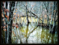 The Swamp (~SwmpGrl~) Tags: trees water leaves branches swamp bbng