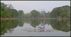'Early Morning'  Sukhothai, Thailand (larryoien) Tags: reflection thailand lx5 shukhothai beautifulcapturegroup absolutelystunningscapes totallythaqiland