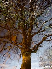 Green tree (Tintin44 - Sylvain Masson) Tags: tree green olympus vert paysage arbre reflets e5 1454 hautegoulaine pontdelouen