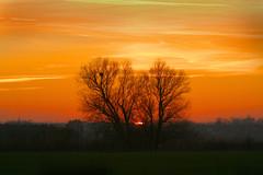 Disappearing Sun 16.01.2012 (marriottphotos) Tags: england orange sun tree weather reeds peterborough sets
