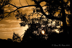 20120117 Golden glow after rain (Degilbo on flickr) Tags: sunset silhouette brisbane queensland magichour canoneos500d lightroom3 topazdetail