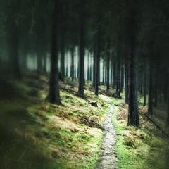 Rothaarsteig (bennybehr) Tags: winter nature germany dark dawn wind dusk hiking path grunge natur wiese nrw gras grn holz wald wandern dunkel weg spaziergang iphone siegerland strahlen rothaargebirge