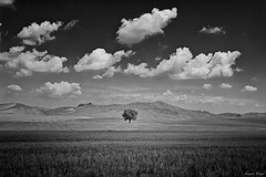 A Peak of Beauty (Angelo Bosco) Tags: blackandwhite tree sicily minimalism sicilia