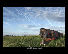 On The Bottle Again (roddersdad) Tags: dog countryside boxerdog roderick rodders 2011 petdogs canon1dsmkll wwwimagesbyclivecouk copyrightclivejmaclennan canonef1740mmf4lusmlenscopyrightclivejmaclennan
