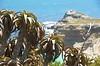 Cape Point (Lauren Barkume) Tags: ocean africa blue sea vacation plants green nature southafrica aloe december ct capetown capepoint westerncape 2011 laurenbarkume gettyimagesmeandafrica1