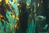 Sea Forest (Lauren Barkume) Tags: africa vacation southafrica december ct capetown westerncape 2011 laurenbarkume gettyimagesmeandafrica1