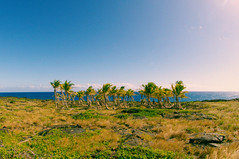 whereyougotodie (grainwave) Tags: ocean sea sun beautiful island hawaii palm oasis