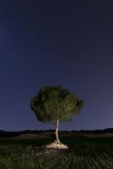 Alone and cold (raul_lg) Tags: sky lightpainting tree canon stars arbol murcia cielo estrellas nocturna linterna corvera largaexposicion maglite3d raullg