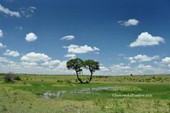 Maasai Mara, Kenya (Dan & Luiza from TravelPlusStyle.com) Tags: africa kenya masaimara cottars1920scamp