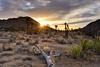 Navigating Life (Northern Straits Photo) Tags: california ca sunset usa joshuatreenationalpark northernstraitsphotography