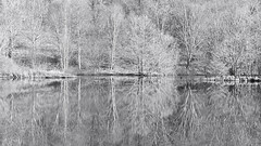 Reflections (spodzone) Tags: trees blackandwhite reflection art nature water composite manipulated landscape scotland still flora emotion argyll places calm symmetry gb serene birch toned stacked taynuilt shapeandform rawconversion inverawe enfuse rawtherapee darktable abstractqualities