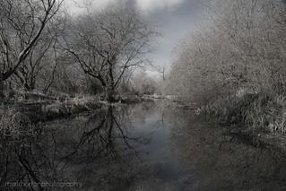 River Lambourn at Welford Park