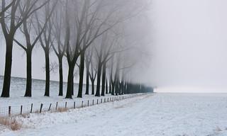 Rij bomen in de ochtendnevel - Row of bare trees in morning mist (-15 degrees C)
