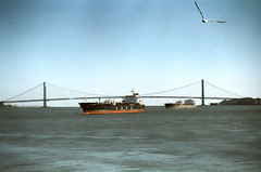 Verrazano narrow bridge (Yun-Chen Jenny) Tags: nyc newyorkcity sea bay    verrazanonarrowbridge