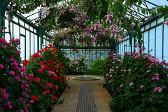 Royal greenhouse (larry_antwerp) Tags: brussels belgium belgië brussel 比利時 laken royalgarden ベルギー брюссель 比利时 布鲁塞尔 بلجيكا בלגיה бельгия بروكسل koninklijkeserre 벨기에 بلژیک बेल्जियम ブリュッセル市