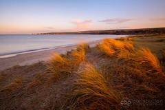 Studland Beach, Dorset (chrisbutton68) Tags: sunset texture beach grass horizontal flow evening bay coast landscapes nationalpark movement sand outdoor dune scenic windy nationaltrust jurassic purbeck studland oldharry marram middlebeach knollbeach