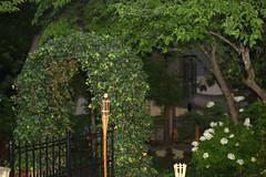 IMG_8685.CR2 (jalexartis) Tags: trees rain spring gloomy calm rainy reflective gloom ilikerain ilikegloomy