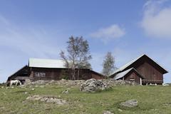 From a Bygone Era (Steffe) Tags: horse rural sweden farm haninge stable sterhaninge hgsta