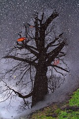 Reflection (Mah Nava) Tags: autumn reflection tree herbst ground baum reflextion boden grund