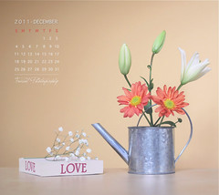 December Calendar (Faisal | Photography) Tags: life flower love colors canon eos still december calendar natural 14 usm 50 ef canonef50mmf14usm 50d canoneos50d faisal|photography فيصلالعلي