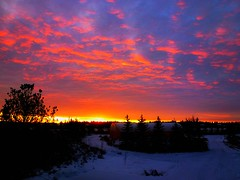 Icy orange sunrise splendour (peggyhr) Tags: blue trees friends light sky orange white snow canada yellow shop clouds sunrise d silhouettes alberta acreage wow1 finegold 25faves peggyhr flickrbronzeaward heartawards bluebirdestates landscapesdreams colourvisions 100commentgroup brilliantphotography artofimages flickraward keepyoureyesopenayezloeil mygearandme blinkagain avpa1maingroup blinkagainforinterestingimages bestofblinkwinners redgroupno1 yellowgroupno2 flickrstruereflection1 greengroupno3 flickrstruereflections gaveyachillsnewcontest p1110423ap