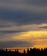 Tree Silhouettes with Gold and Gray Sky (shaire productions) Tags: autumn trees winter light sky color tree fall nature golden photo colorful image outdoor photograph heavens imagery