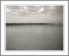 Field of poles (frank_bunnik) Tags: france beach tmax 4x5 poles lowtide tmax400 normandy utahbeach superangulon frankbunnik
