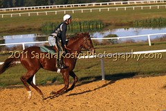 IMG_6263 (SantaFeSandy) Tags: horses track florida jockeys equine thoroughbreds gallop ocala racehorses exerciseriders morningworkouts