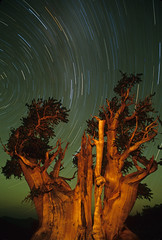 Great Basin N.P. (fred h) Tags: tree pine night star startrails bristlecone greatbasin greatbasinnationalpark lightpanting fredholley faeb1001hf4