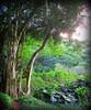 ~~WaimeaBotanicalGarden#16~~ (TravelsThruTheUniverse) Tags: niceshot tropicalplants tropicalflowers exoticgardens zengardens oahuhawaii tropicalgardens tropicalfoliage subtropicalgardens waimeavalleybotanicalgarden tropicallandscapes subtropicallandscapes waimeavalleyoahu waimeaparkhaleiwaoahu