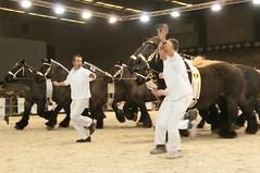 DSC_0981 (Ton van der Weerden) Tags: horses horse dutch de cheval brussel nederlands belges draft 2012 chevaux nationale belgisch trait heizel 2011 agribex trekpaard trekpaarden prijskamp vierjarigennationaleprijskamp2012brussel negenspanzwartschimmels