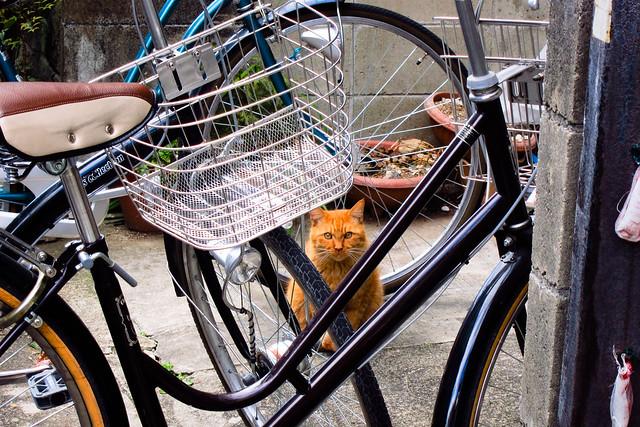 Today's Cat@2011-12-17