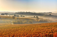 Autumn in Chianti (neimon2 (too busy, sorry for my temporary silence)) Tags: morning autumn italy mist vineyard vine hills vineyards tuscany chianti firenze siena arezzo sanleonino castellinainchianti neimon2