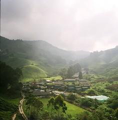 Tea farm (Ifitis) Tags: light green 120 film grass leaves mediumformat village kodak tl malaysia f22 pentacon six p6 cameronhighland pentaconsix czj teafarm
