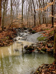 Flat Rock Brook (robertvena) Tags: trees nature colors creek forest river landscape outdoors woods colorful stream brook