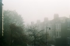 Into the fog (but_those_are) Tags: trees winter london film weather fog 35mm grey kyocera yashica 108 108mp yashica108mp