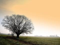 tree in morning mist ( explored ) (mujepa) Tags: winter mist france tree fog landscape frost alone hiver paysage lorraine campagne arbre brouillard brume seul gele saariysqualitypictures tripleniceshot mygearandmepremium photographyforrecreationeliteclub rememberthatmomentlevel1 rememberthatmomentlevel2