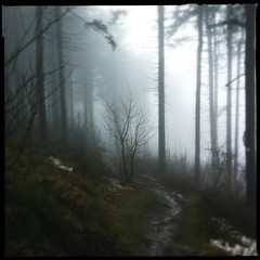 [iPhone] Dark Path (taytomFFM) Tags: trees winter fog forest dark path taunus feldberg loftus iphone4 hipstamatic