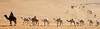 Convoy (TARIQ-M) Tags: texture landscape sand waves desert dunes camel camels convoy riyadh saudiarabia sponsor بر الصحراء جمال الرياض راعي صحراء رمال جمل ابل رمل canonef70200mmf4lusm طعس نياق حوار المملكةالعربيةالسعودية الرمل ناقة خطوط صحاري قافلة canoneos5dmarkii حاشي نفود الرمال كثبان براري القافلة تموجات تموج نفد حواشي قوافل رحوال