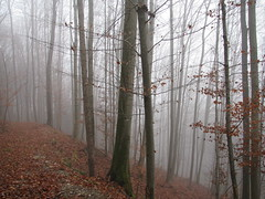 In the Forest (Been Around) Tags: november trees tree nature forest austria sterreich europa europe niceshot travellers natur foggy eu wald bume fo baum obersterreich autriche austrian 2010 aut o ennstal  upperaustria 5photosaday a steyrland hauteautriche concordians thisphotorocks worldtrekker visipix expressyourselfaward flickrunitedaward bauimage oberdambach oberdambachbeisteyr