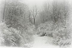 2011-12-27 [1326] Only the distant seems clear (Badger 23 / jezevec) Tags: schnee trees winter snow tree forest vinter hiver nieve sneeuw neve invierno neige lumi inverno talvi  zima   seh eira salju snijeg snjr  vetur salji hivern   2011 jezevec   sneeu tl naiv snh erch   iema nieu neguan  qar  mang zimn  taglamig   badger23 eve  zimn   20111227 khunu    11kek27