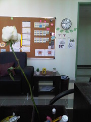 MY OFFICE (R.ALGYED) Tags: rose office