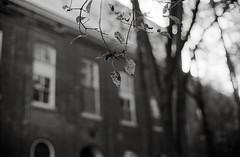 The Feel of Fall (DowntownRickyBrown) Tags: fall leaves 35mm bokeh nikonf3hp mareisland fujineopanacros selfdevelop nikkor50mm12ais ilfosol3