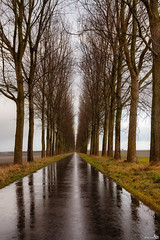 The weather today (BraCom (Bram)) Tags: road trees cold wet netherlands rain clouds grey bomen nederland wolken nat regen stellendam weg grijs koud zuidholland goereeoverflakkee theacademytreealley bracom